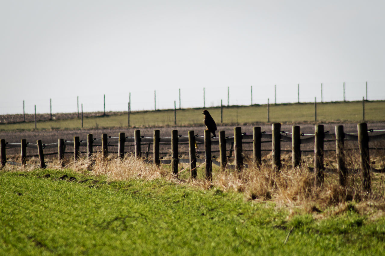 Bird Perching On Wooden Fence At Field Against Sky