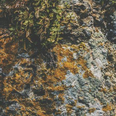 Vscocam Nature Rockrockrock