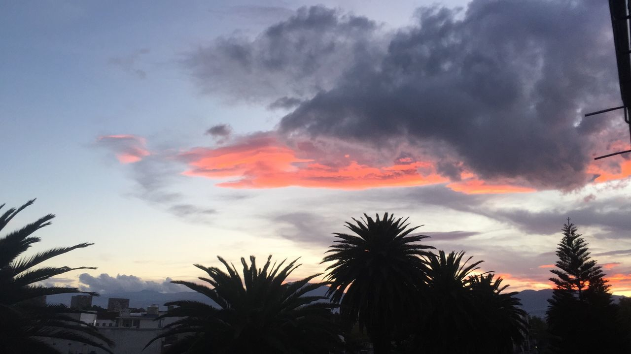 Sky Tree Sunset Cloud - Sky Tranquil Scene Beauty In Nature Low Angle View Nature Palm Tree Day Outdoors No People
