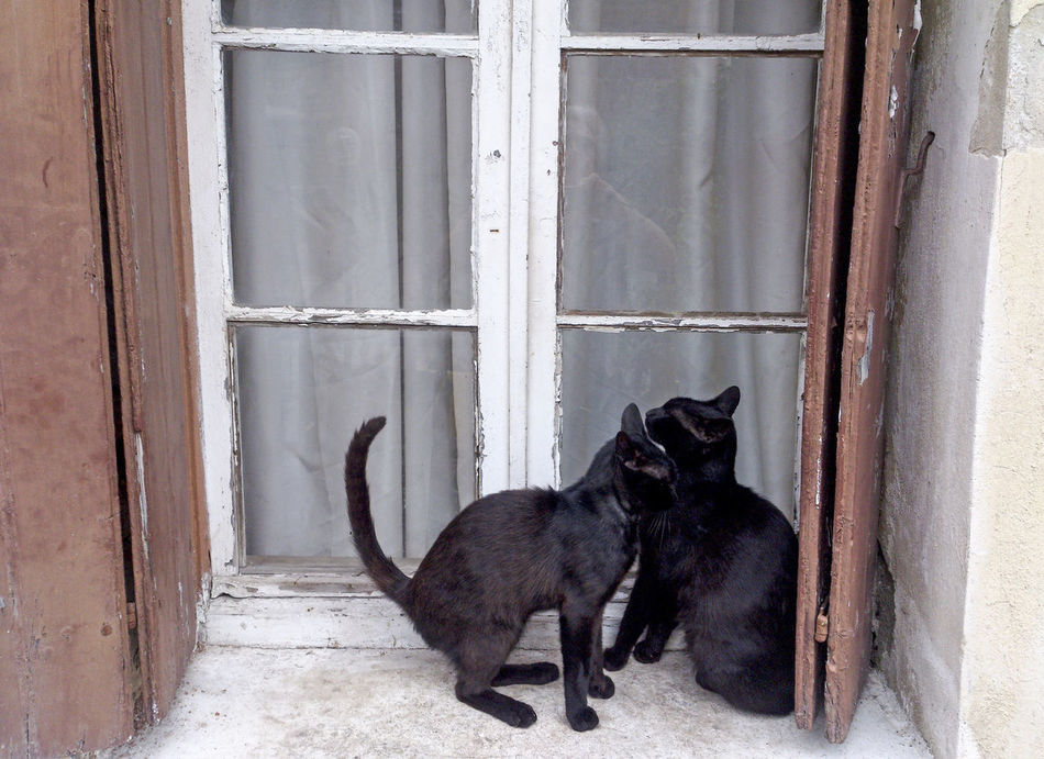 ' Please let us in ' 2 cats on a window ledge, Chania Old Town, Crete, Greece Animal Black Color Cats, Cat, Chana Crete Greece Day Domestic Animals Feline Greece Hania Iconic Mammal Mediterranean  No People Outside Pets Sat Travel Travel Photography Window