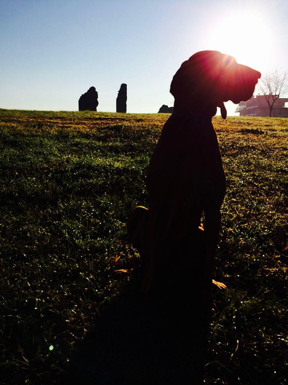 Vizsla Dog Sitting On Field Against Sky