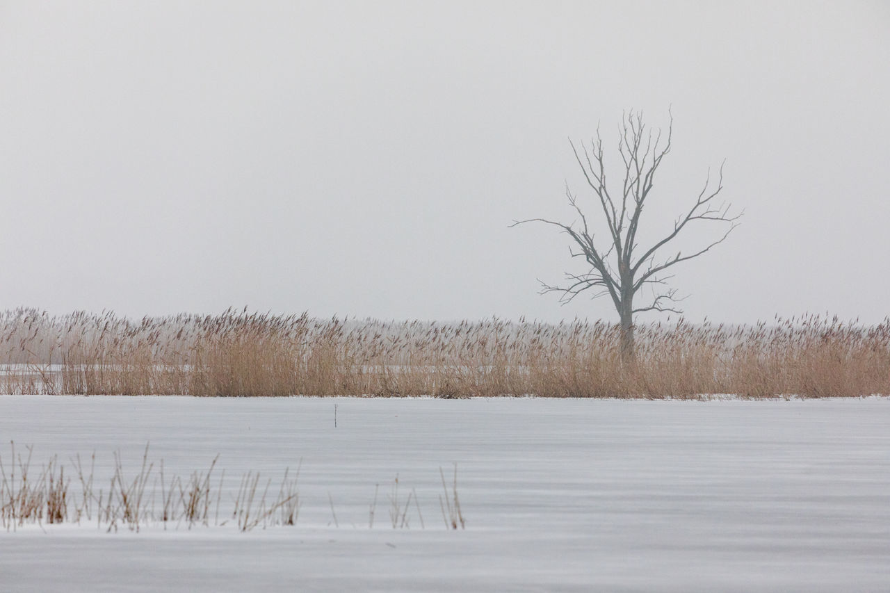 Bare Tree Beauty In Nature Cold Temperature Day Fog Foggy Frozen Frozen Lake Grey Lake Landscape Lone Nature No People Outdoors Polderwiesen Reed Sky Snow Tranquil Scene Tranquility Tree Water Weather Winter