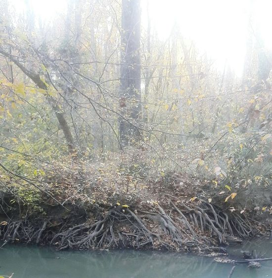 Tree Nature Growth Water No People Beauty In Nature Tranquility Outdoors Day Scenics Sky Erosion Erosion Effects Creekside Photography Exposed Roots