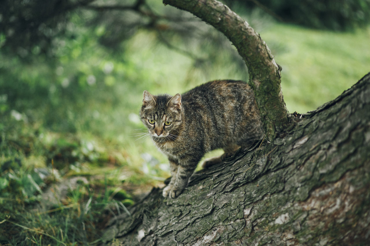 Lazy Sunday in Mielec, Poland. Animal Themes Close-up Day Domestic Animals Domestic Cat Feline Looking At Camera Mammal Nature No People One Animal Outdoors Pets Portrait Tree