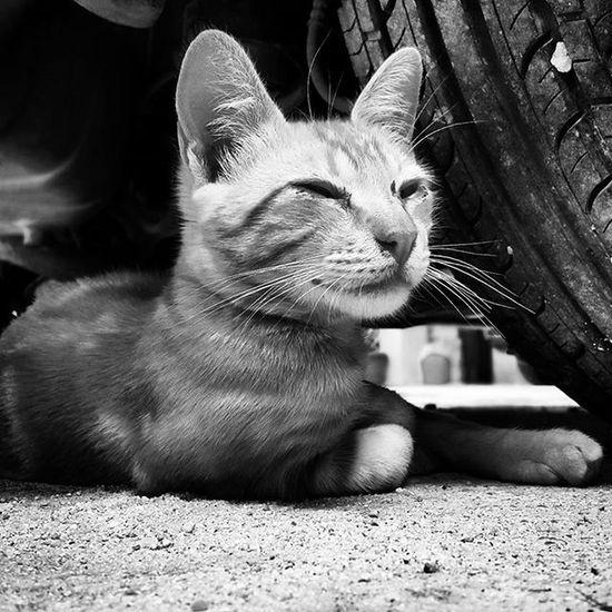 Yellow Cat 😼 Cats Catsofinstagram Yellowcat Yellowcats