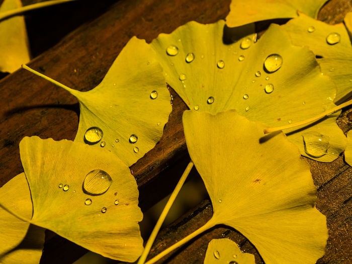 Paint The Town Yellow Close-up Drop Fragility Leaf Nature No People Outdoors Water Wet Yellow