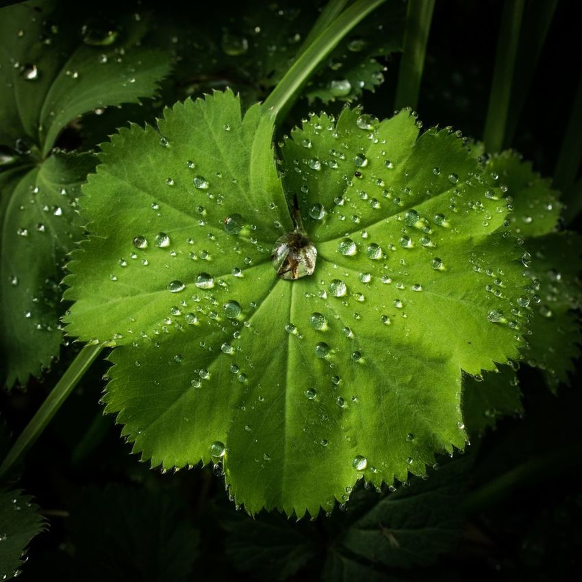 Leaf Nature Drop Water Green Color Social Issues Fragility Beauty In Nature Close-up No People Plant Outdoors Freshness One Animal Day Flower Animal Themes