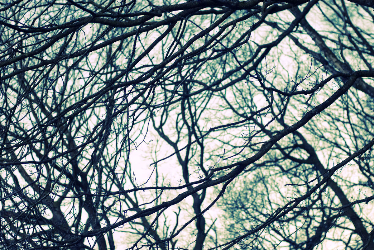 branches in a winter woodland with a cross processed effect Arbor Arboretum Background Backgrounds Bare Tree Branch Cross Process Crossprocessed Deciduous Green Growth Leafless Limbs Low Angle View Mystery Nature No People Outdoors Pattern Shape Silhouette Tree Twigs Wintery