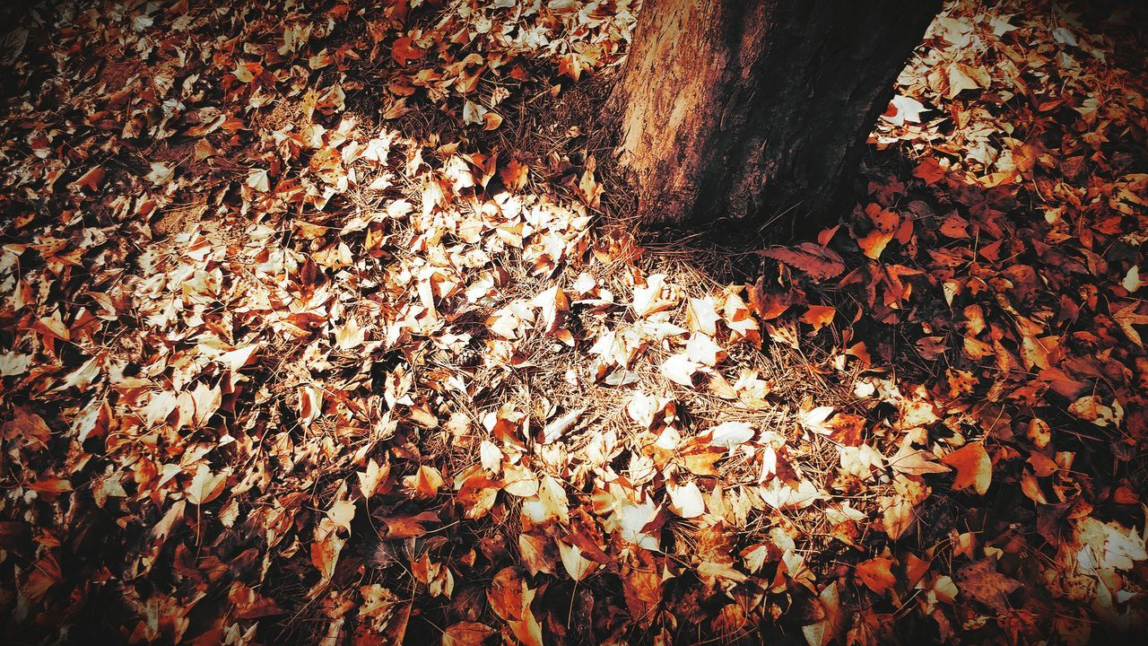 Autumn Leaves Leaves Shadow Full Frame High Angle View Shadows & Lights Outdoors No People Nature Close-up Day