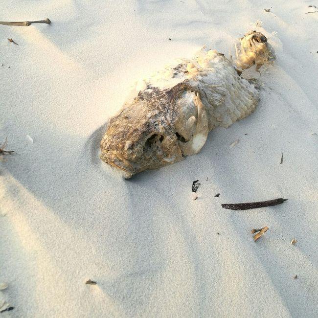 Animal Themes Sand Death Death & Decay Nature Fish Dead Animal Dead Fısh Nature