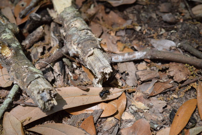 Abandoned Black Ant Broken Brown Close-up Damaged Day Dry Firewood Focus On Foreground High Angle View Insect Photography Leaf Log Messy No People Old Outdoors Rusty Wood Wood - Material
