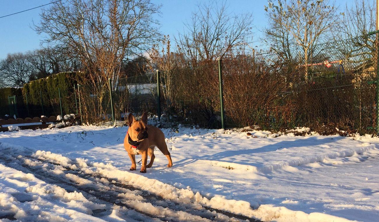 Winter Morning.... Taking Photos Enjoying Life Beautiful Day Lovely Weather Eyeem Natur Lover I Love My Dog French Bulldog