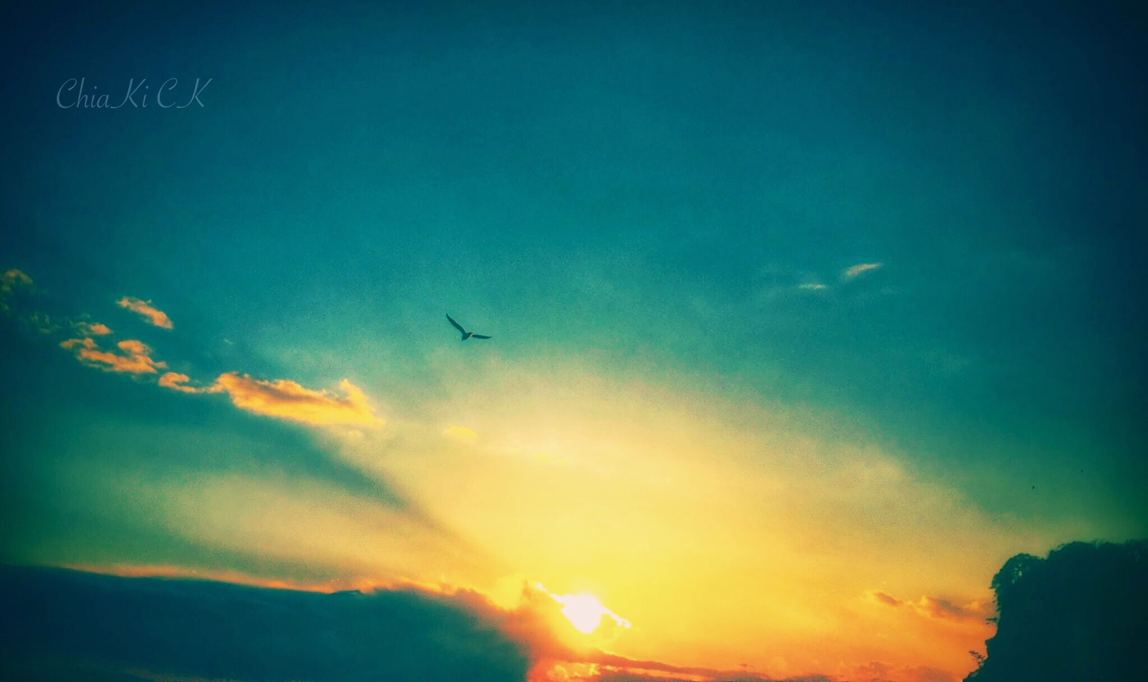 flying, sunset, sky, silhouette, low angle view, bird, cloud - sky, animal themes, beauty in nature, scenics, mid-air, nature, airplane, wildlife, transportation, dusk, cloud, tranquility, animals in the wild, blue