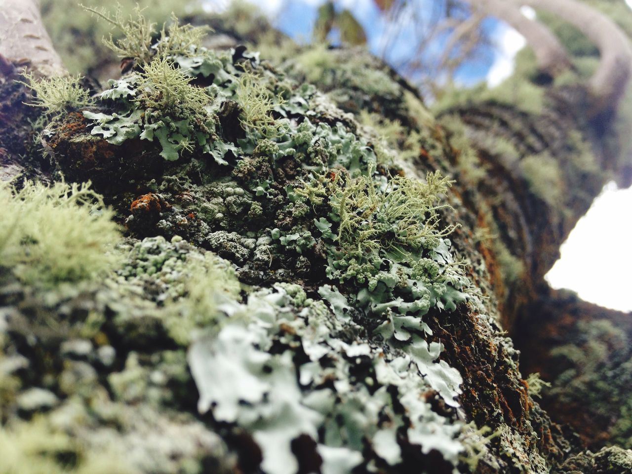 selective focus, lichen, close-up, moss, nature, marijuana - herbal cannabis, no people, growth, day, outdoors, plant, fungus