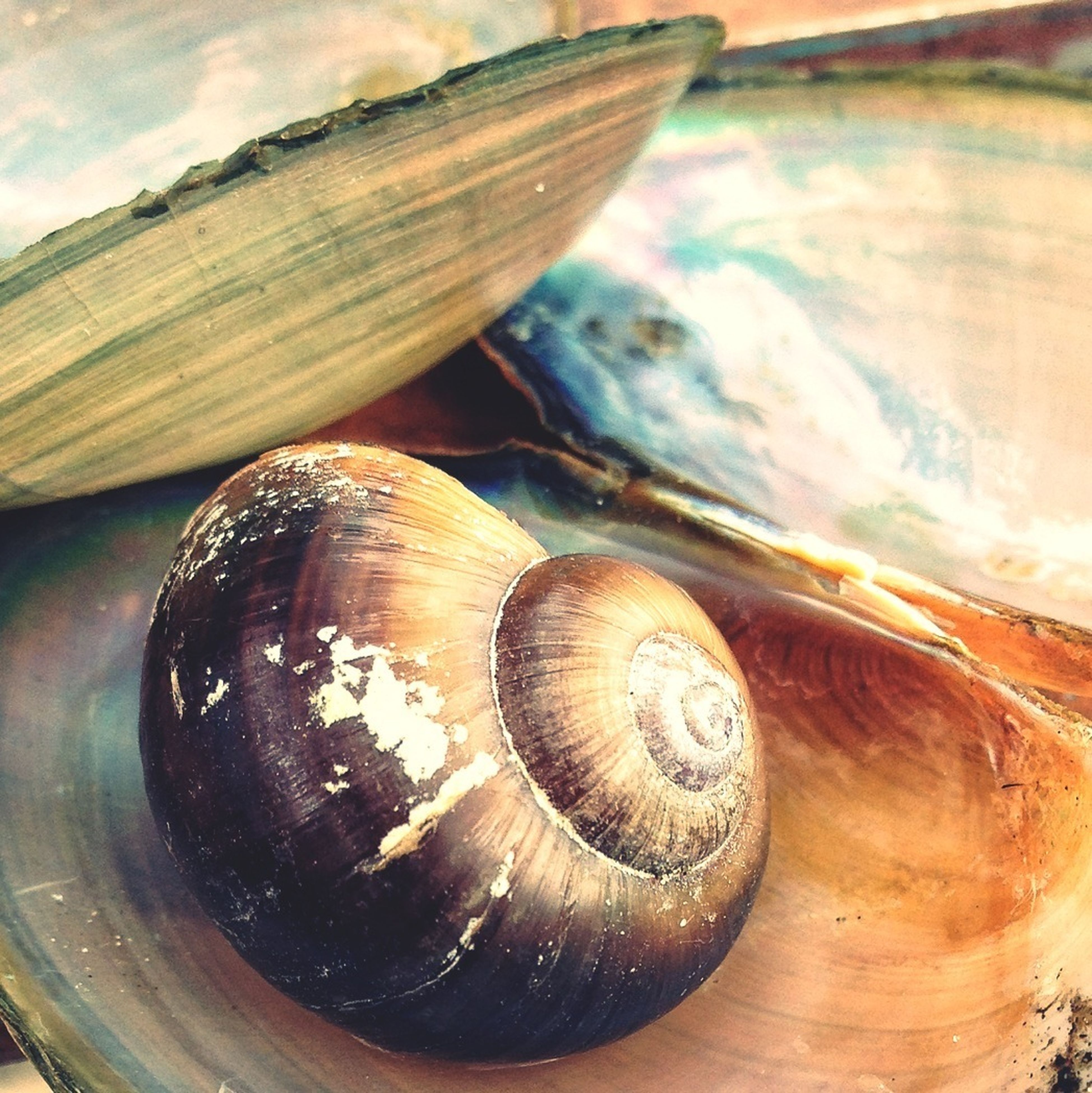 close-up, wood - material, animal shell, snail, shell, wooden, high angle view, focus on foreground, still life, seashell, no people, wood, day, nature, outdoors, table, textured, pattern, natural pattern, log