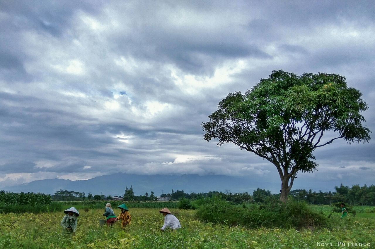 cloud - sky, tree, field, sky, nature, real people, landscape, agriculture, scenics, beauty in nature, rural scene, tranquil scene, grass, tranquility, rear view, growth, men, farmer, outdoors, day, women, working, people
