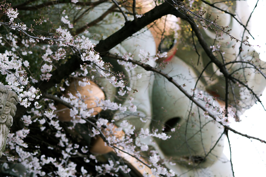 Blossom Day Demon Focus On Foreground Hanami Japan Japan Photography Morning No People OSAKA Outdoors Religion Relogios Sakura Shrine Spring Street Sunshine Temple Ward