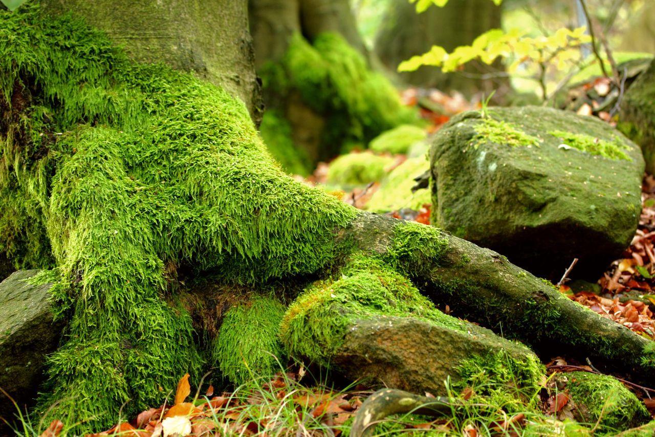 Herbststimmung Herbst🍁 No People Plant Outdoors Herbst, Laub, Herbstlaub, Herbstfarben, Herbstleuchten, Herbstspaziergang,