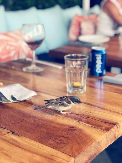 Table Animal Bird 스페인 빠에야