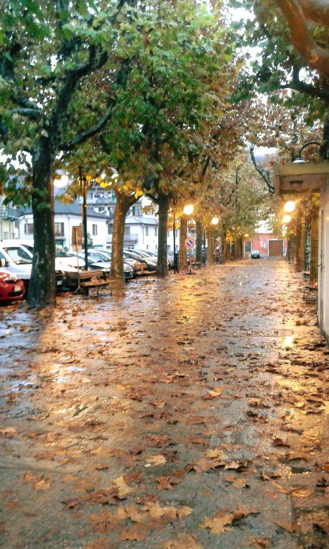 Autumn Autumn Colors Autumn Leaves Leaves Brown Autunno  Colori D'autunno Foglie Marrone Foglie A Terra Luci Serali