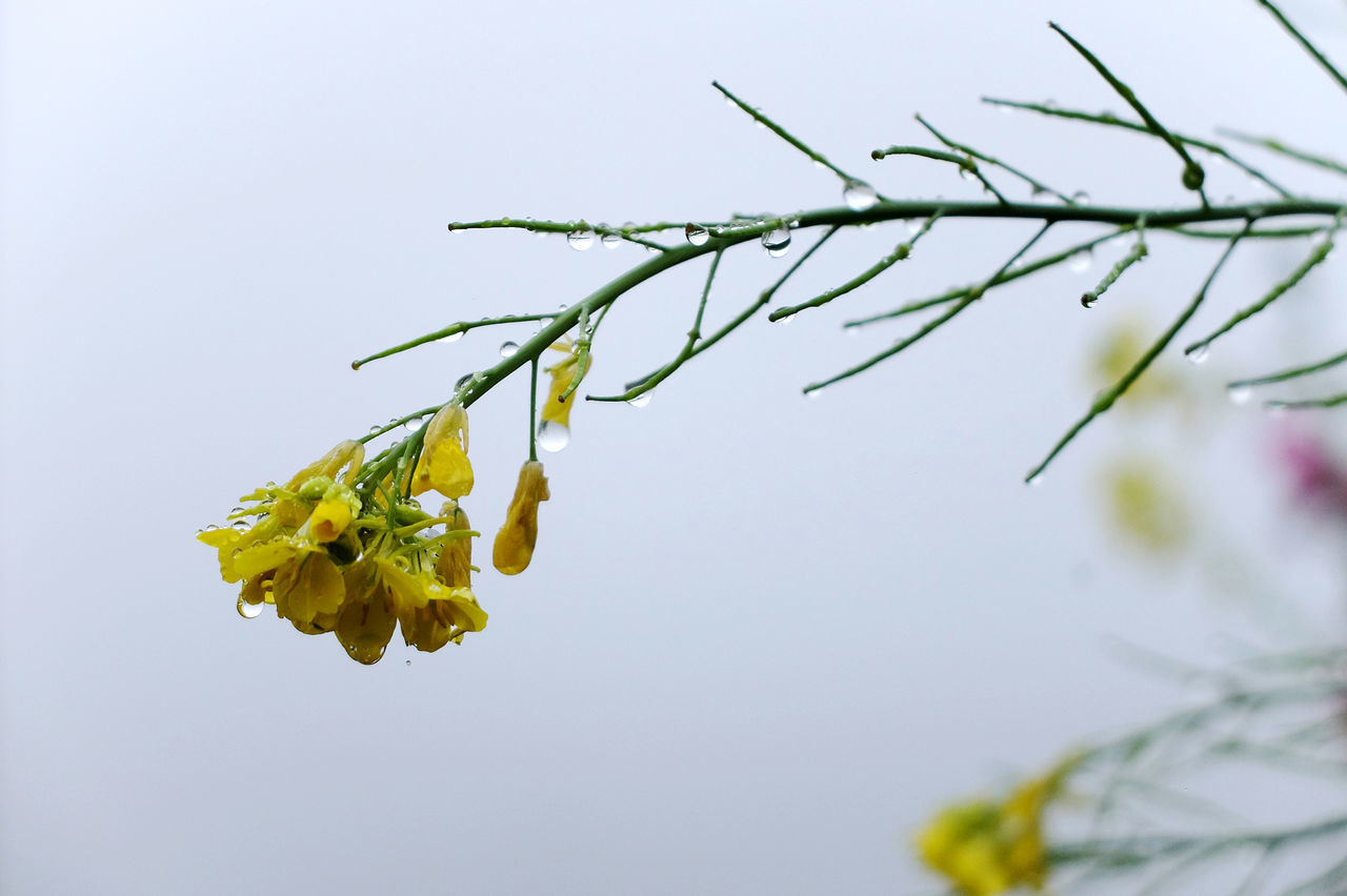 Beauty In Nature Branch Close-up Day Flower Flower Head Fragility Freshness Growth Leaf Nature No People Outdoors Plant Plant Part Sky Social Issues Yellow