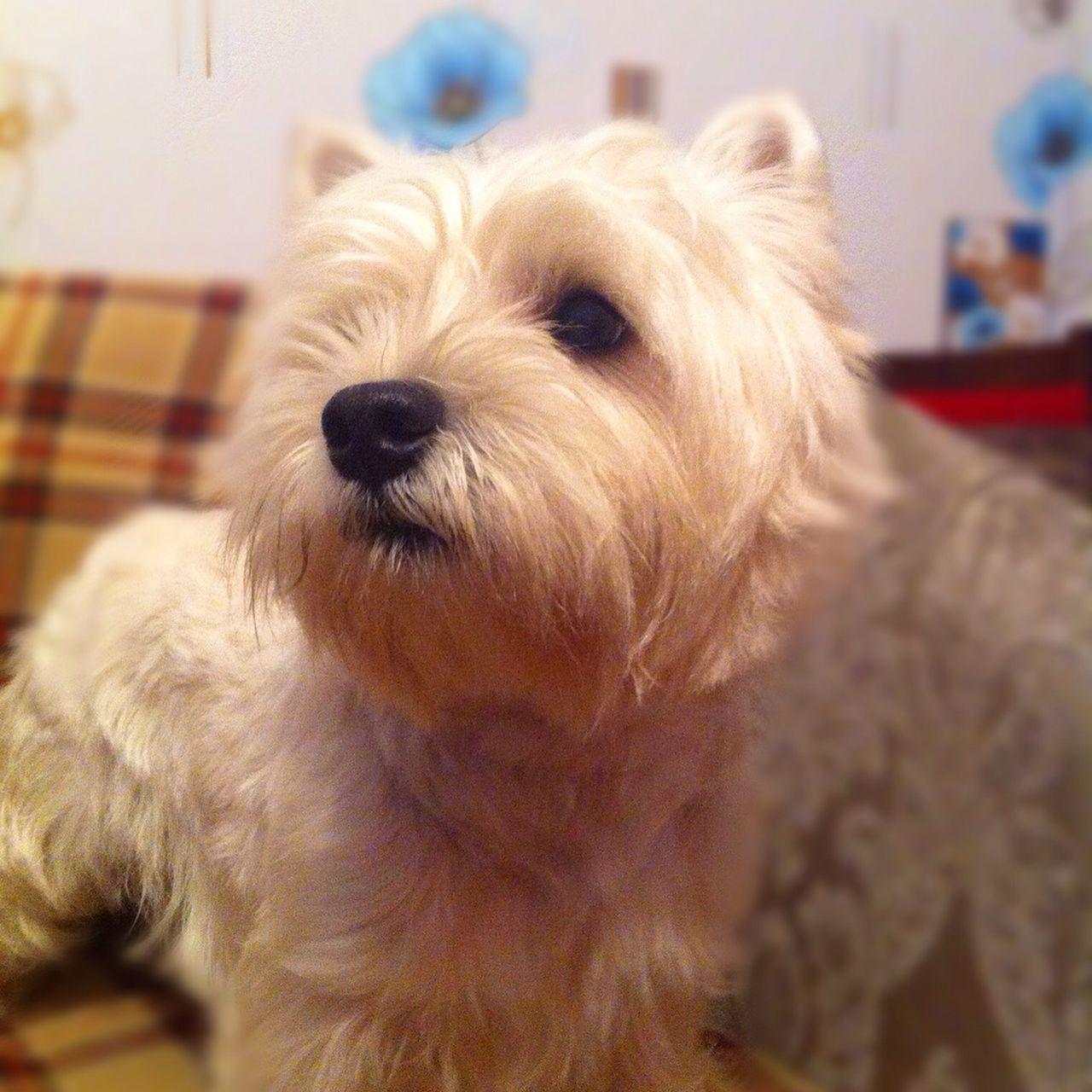Dog Dog Love I Love My Dog My Dog