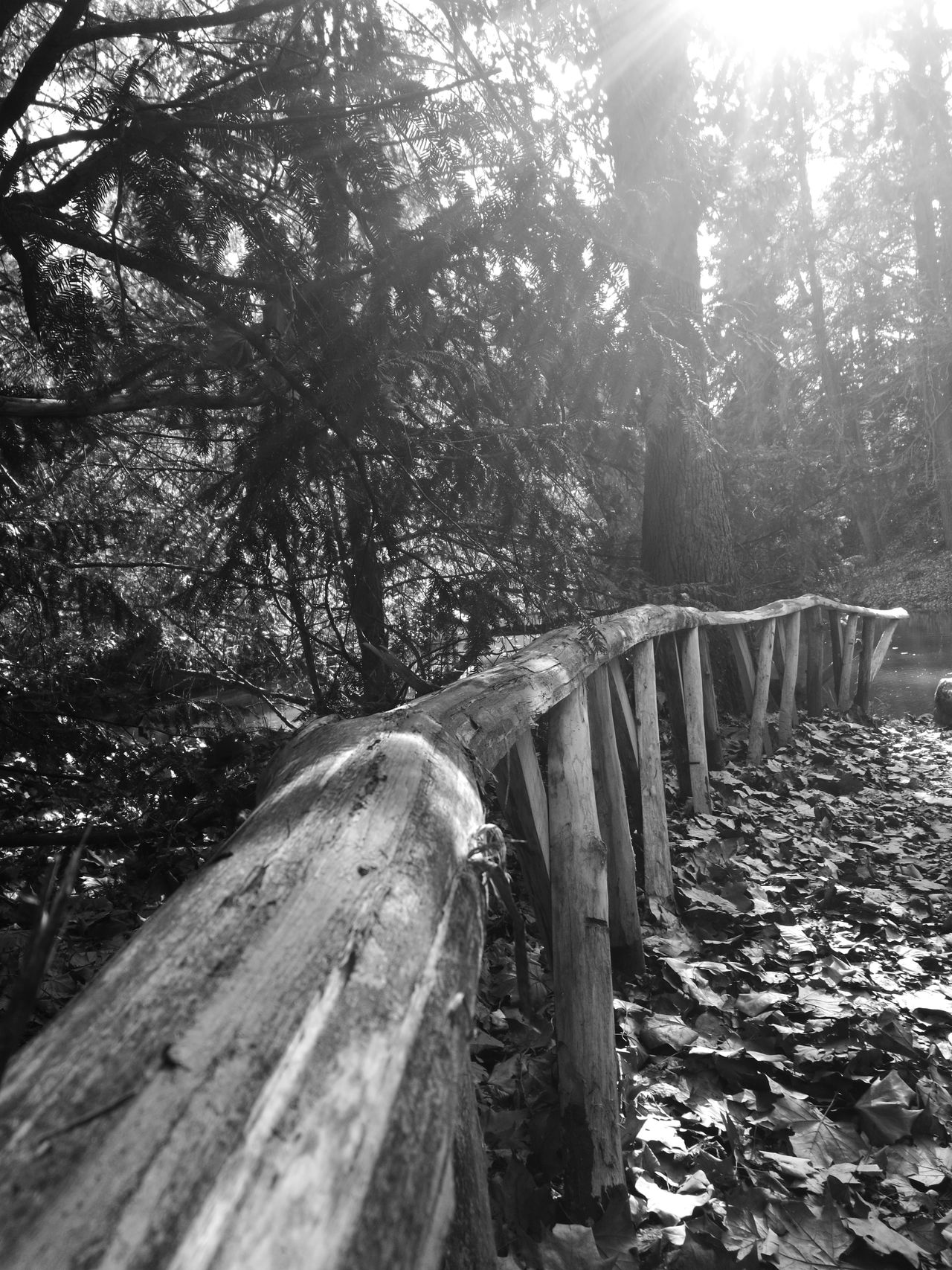Wood Outside FreeTime Black & White Nature Trees No People Beauty In Nature Arboretum Sunshine Shadow