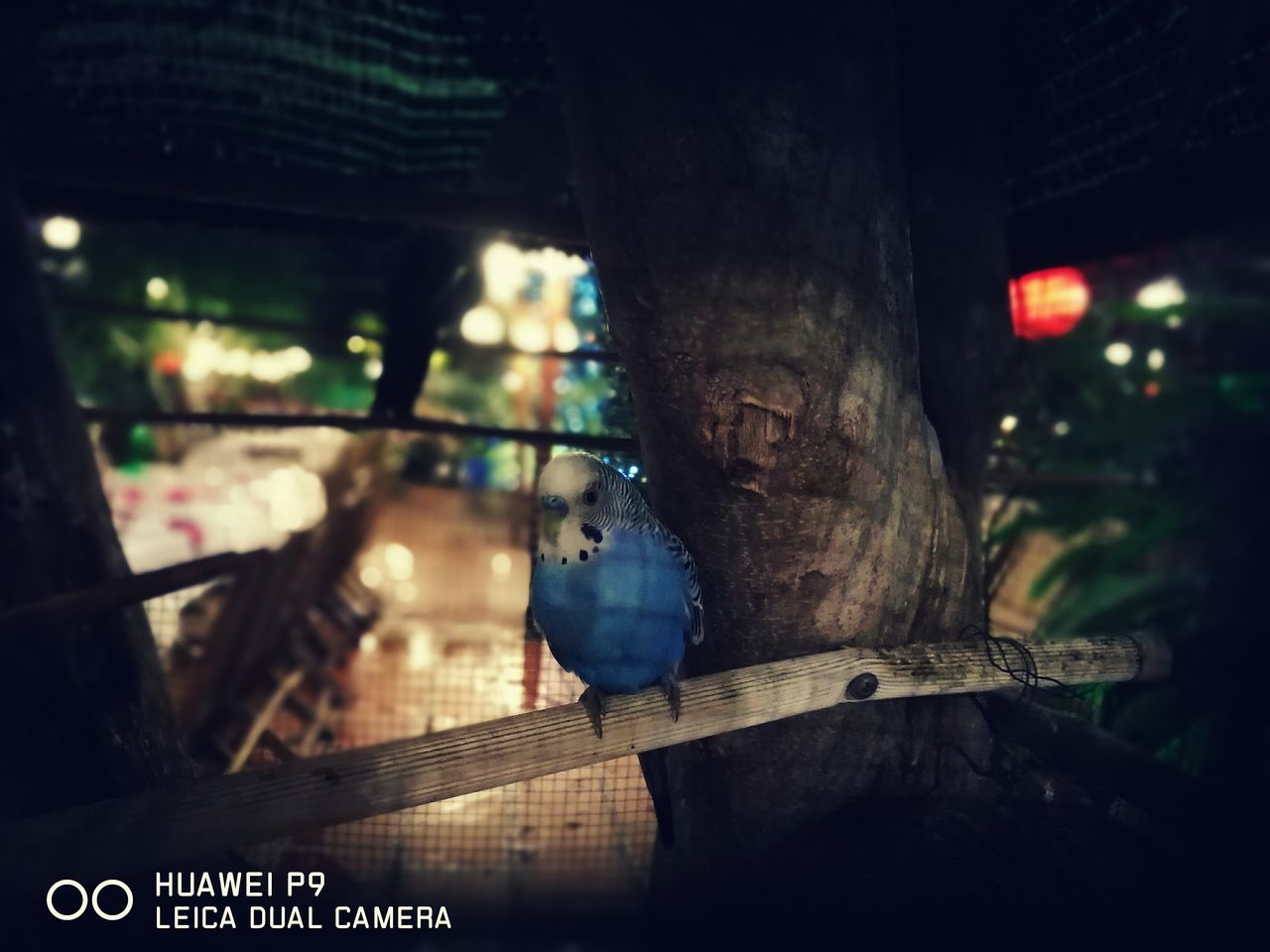 focus on foreground, no people, close-up, outdoors, tree, night, nature, animal themes