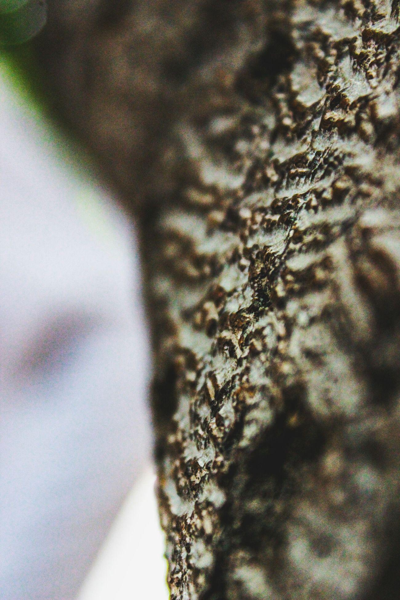 - Tree Texture. Maximum Closeness Beauty In Nature Close-up No People Day Outdoors Tree Texture TreePorn Treetastic Trees And Sky Tree And Sky Tree Bark Trees Collection Tree Branches Treetop Tree Trunk Tree Tree Roots  Tree Stump Tree Of Life Tree Porn Treelined Trees And Nature Tree Roots  Treelovers
