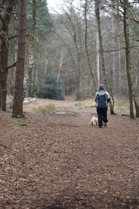 Adult Beauty In Nature Day Dog Dog Walker Dog Walking Forest Leisure Activity Lifestyles Nature One Man Only Outdoors Rear View Surrey Heath Tree Walking