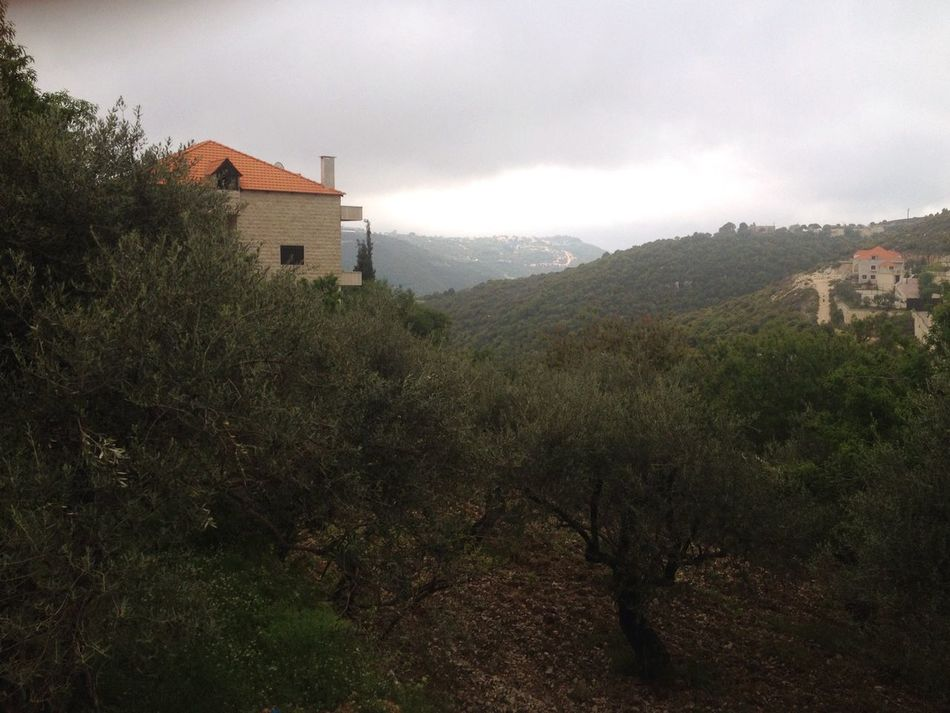 Architecture Olive Trees House No People Nature Cloudy Easter