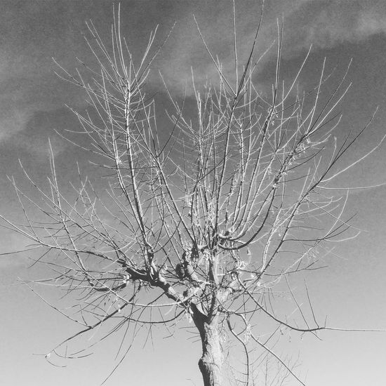 Nature Beauty In Nature Black And White Photography Black&white Tree Outdoors Fragility