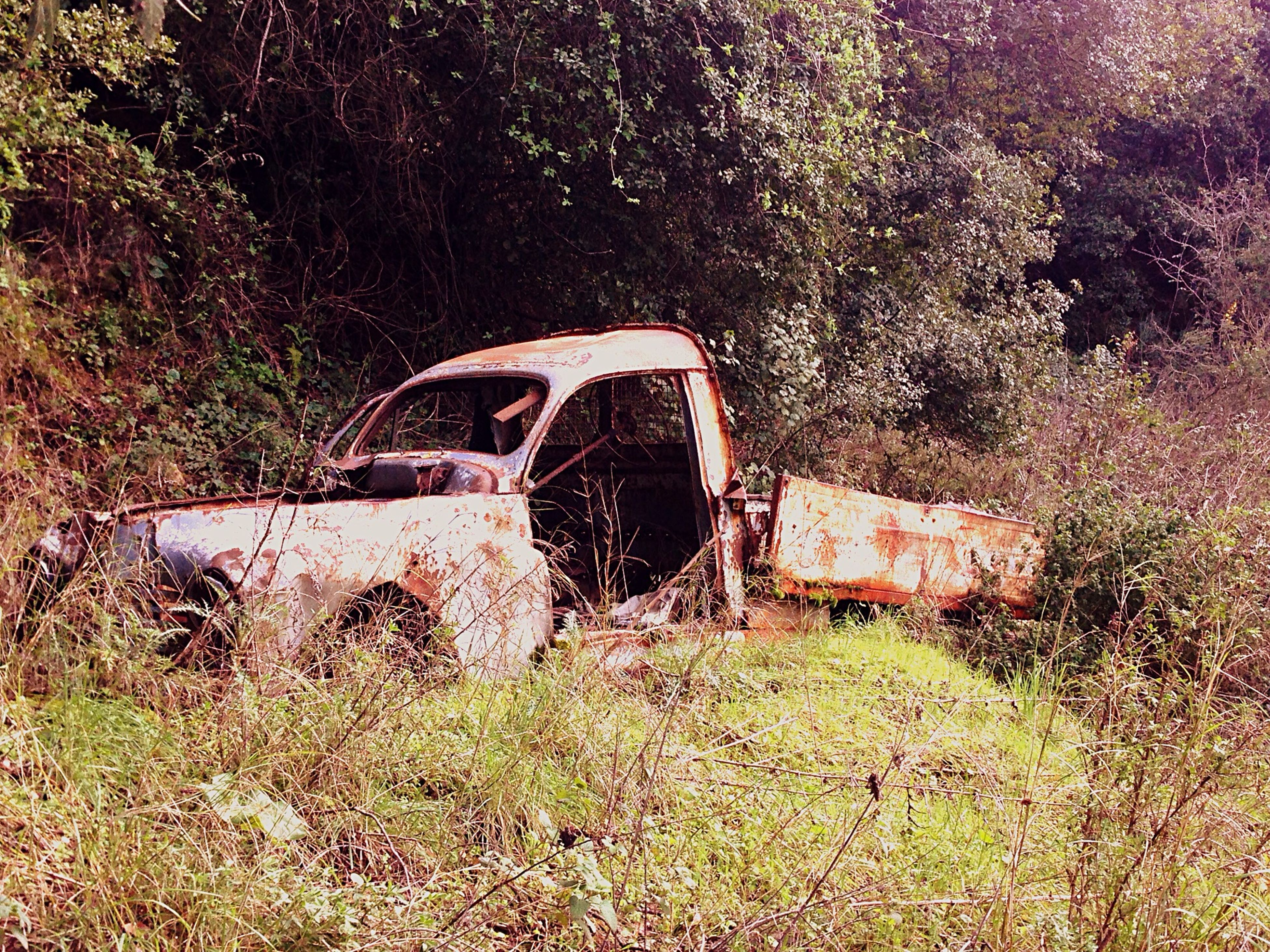 abandoned, obsolete, damaged, run-down, deterioration, old, transportation, mode of transport, grass, land vehicle, bad condition, rusty, field, weathered, tree, broken, car, destruction, day, no people
