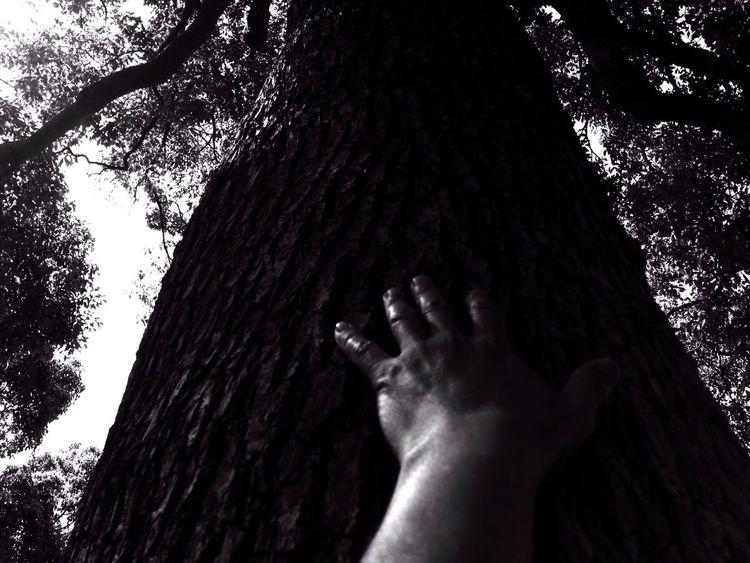 Tree Hand 🎶 John Lennon - God