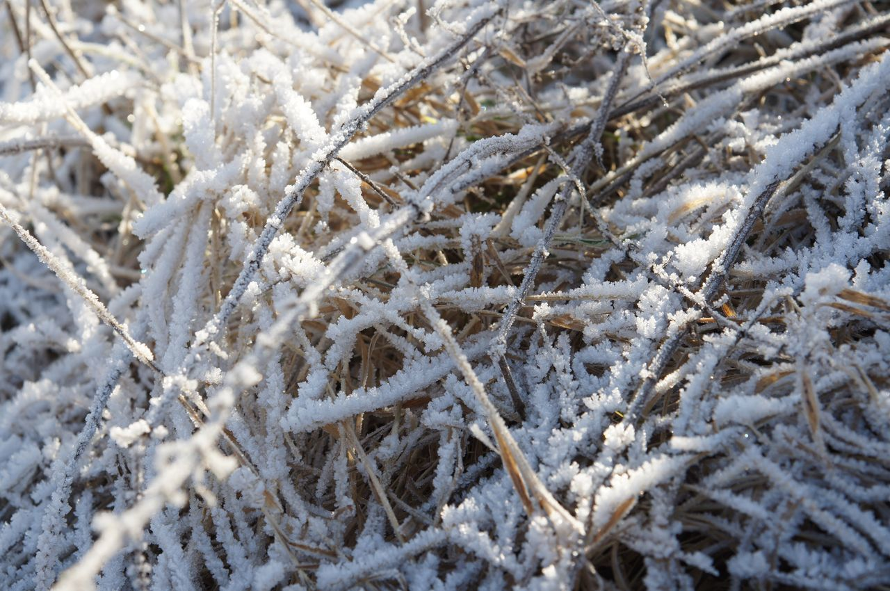 © by Luca 1️⃣1️⃣ Winter Cold Temperature Weather White Color Nature Frost Field Outdoors Backgrounds No People Beauty In Nature Plant Tranquil Scene Power In Nature Landscape Tranquility Nature Frozen Idyllic Scenics EyeEm Best Shots - Nature EyeEm Nature Lover Nature_collection Nature Photography Landscape_photography