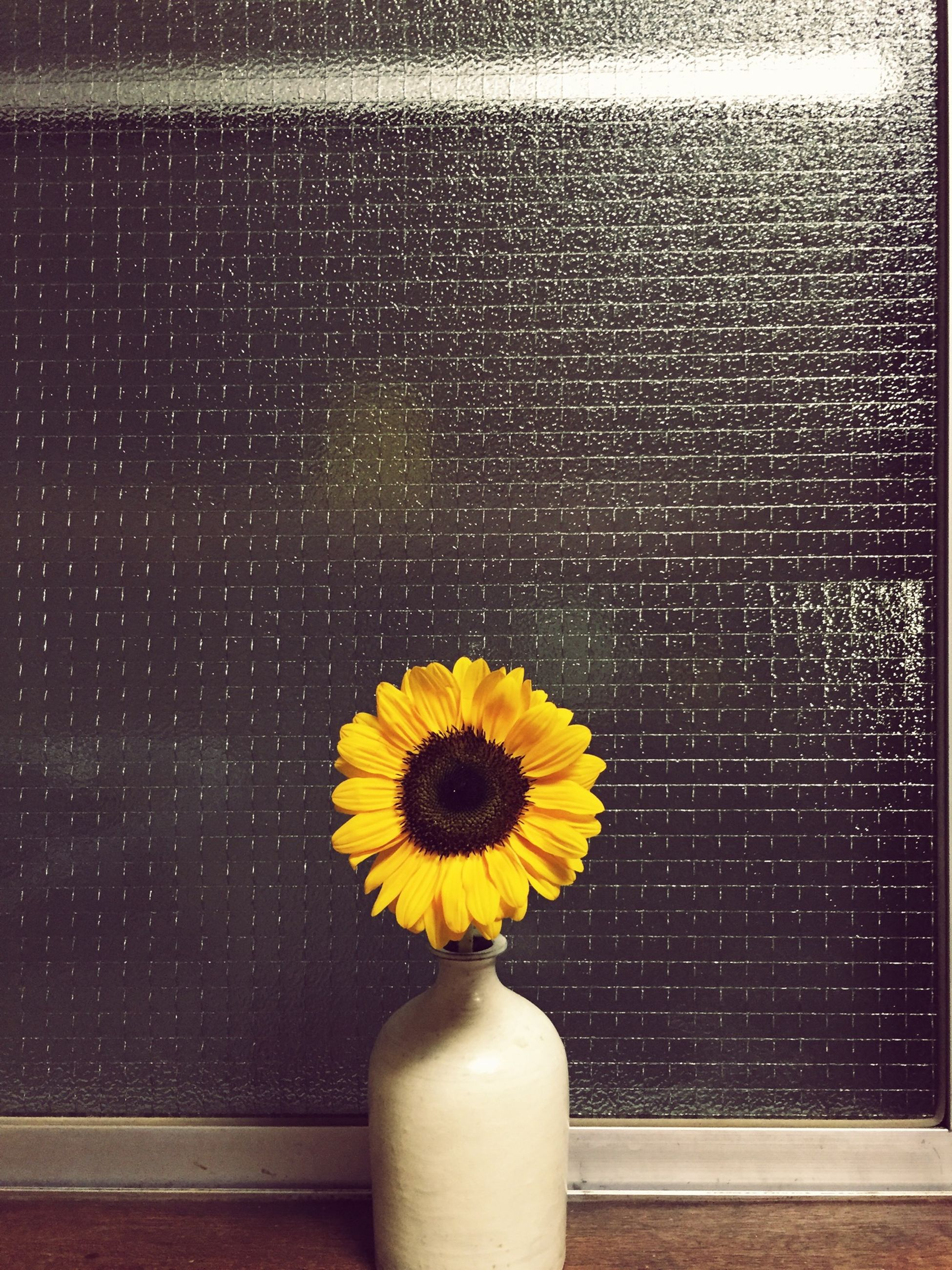 flower, yellow, fragility, freshness, flower head, petal, close-up, single flower, plant, growth, nature, blooming, indoors, in bloom, beauty in nature, wall - building feature, potted plant, daisy, no people