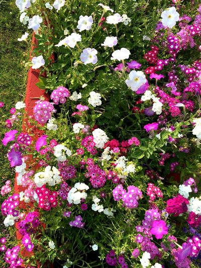Flower Growth No People Nature Plant Beauty In Nature Green Color Outdoors Day White Color Colorful Nature