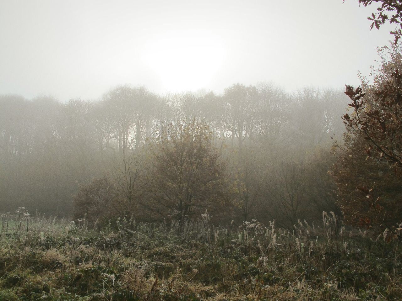 Fog Nature Tree Landscape Growth Beauty In Nature Tranquility Outdoors No People Water Sky Day Grass Hazy  Foggy Morning EyeEmbestshots Cold Temperature Frosty Days Fineartphotography Tranquil Scene Foggymornings Autumnbeauty Autumn Leaves WoodLand Enchanted Forest River Bank