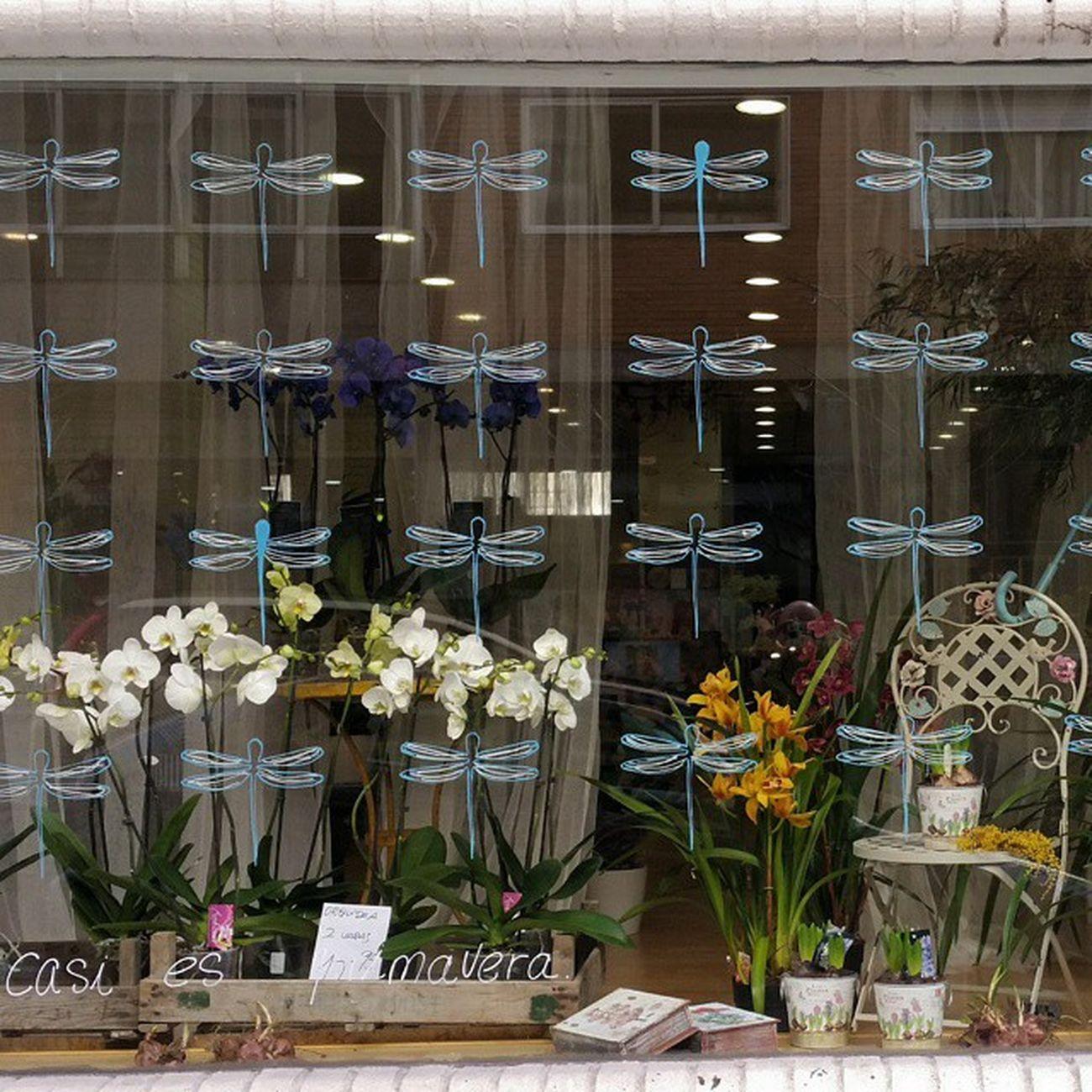 New Window Display at Alea flores   concept store. rúa Barcelona, 83 Vigo Aleafloristerias Inspiration Orquídea Phalaenopsis Yacasiesprimavera Springiscomming