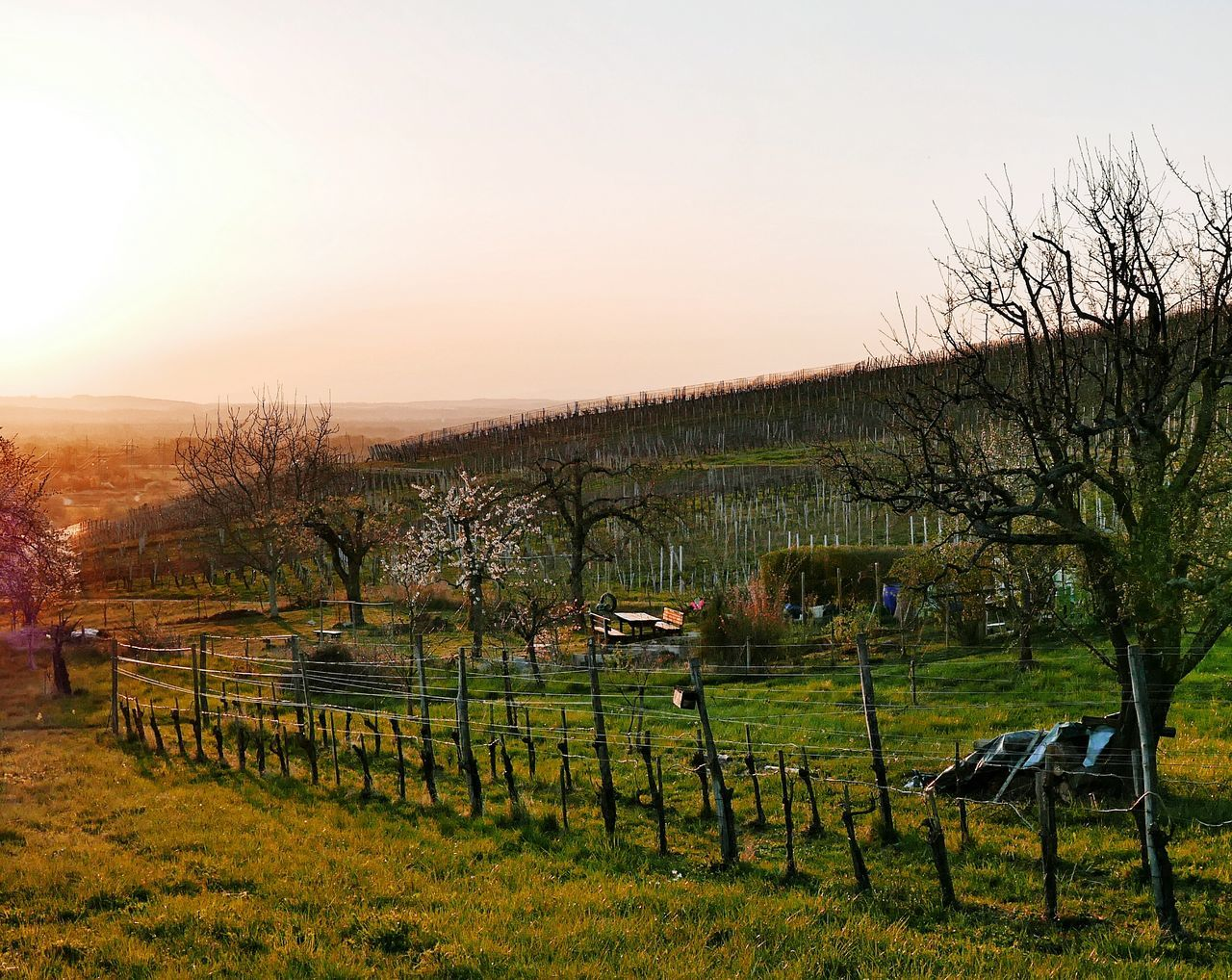 Tischleindeckdich! Wine Moments Agriculture Beauty In Nature Rural Scene Scenics Tree Nature Tranquility Sky Growth Idyllic Landscape Outdoors Sun No People Tranquil Scene Mountain View Landscape_Collection Black Forest !!!! Winery View Wineroute Sunset Silhouettes Spring Time Sunset
