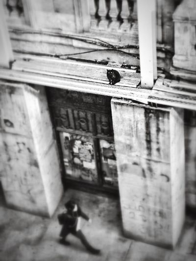 Salamanca SPAIN Cat Streetphoto_bw Streetphotography People Watching Capture The Moment Cool