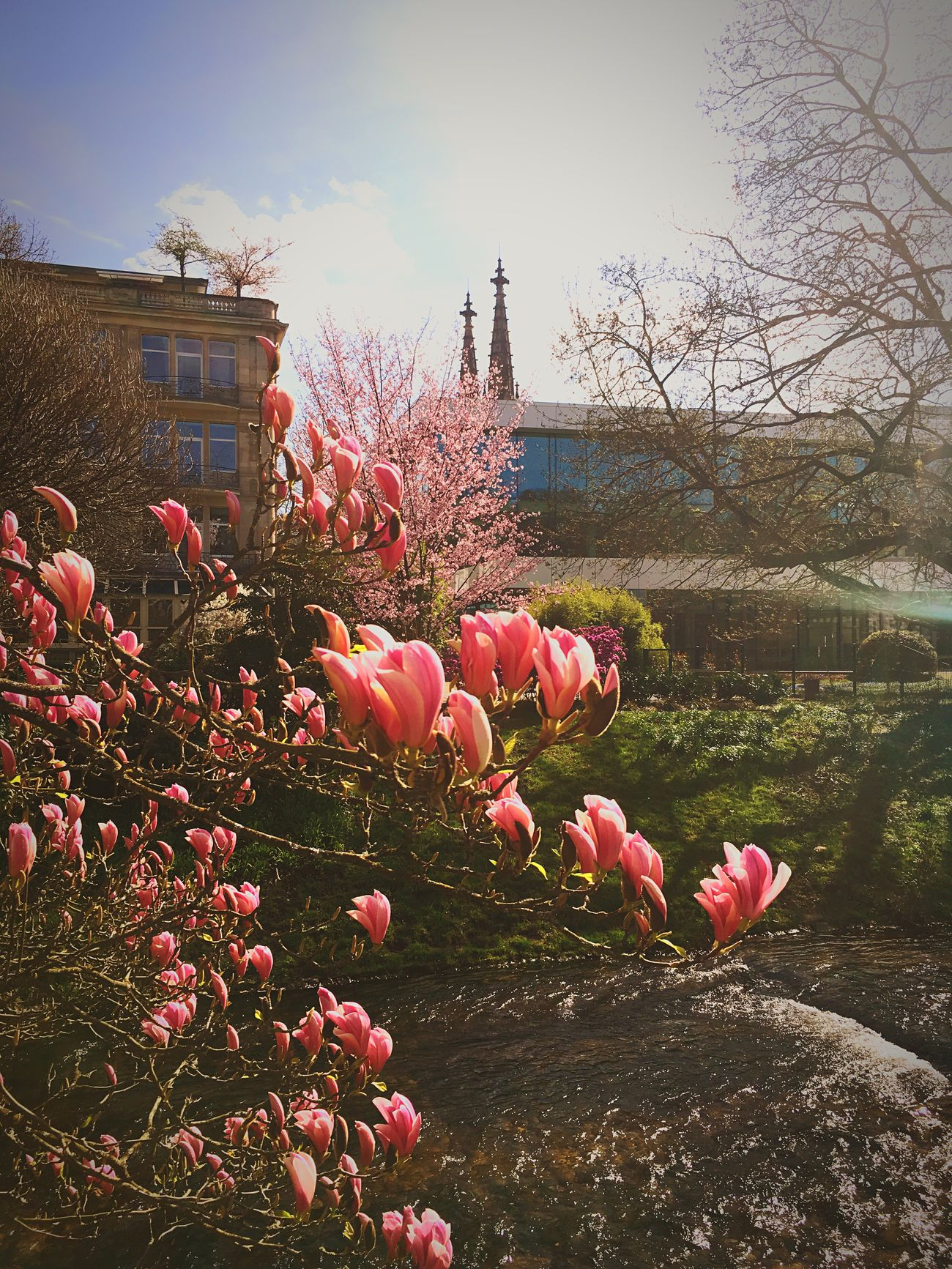 Millennial Pink Flowers, Nature And Beauty Baden Baden Germany Blooming Springtime No People Outdoors Day Freshness Fragility First Eyeem Photo Millennial Pink
