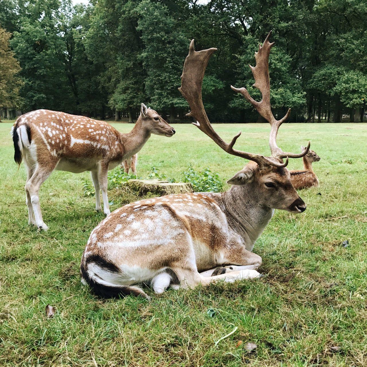 Deer Roe Deer Animals Animal Herd Animal Themes Grass Mammal Nature Day No People Domestic Animals