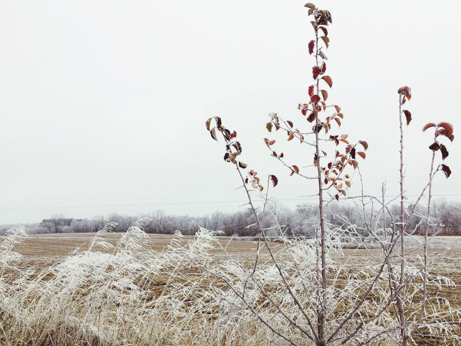 Freezing Fog Growth Nature Field Beauty In Nature No People Tranquility Plant Outdoors Day Tranquil Scene Landscape Agriculture Cold Winter Fog Ice Frost Frosty Mornings