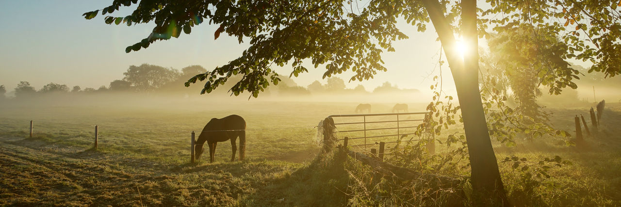 Horses on the pasture on a beautiful foggy autumn morning Autumn Backlit Beauty Beauty In Nature Day Fog Gate Grass Grassland Haze Horse Horses Landscape Meadow Nature No People Outdoors Panorama Pasture Riding Sky Sun Sunlight Sunrise Tree