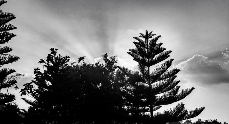 Light And Shadow Tree Sky Low Angle View Nature Outdoors