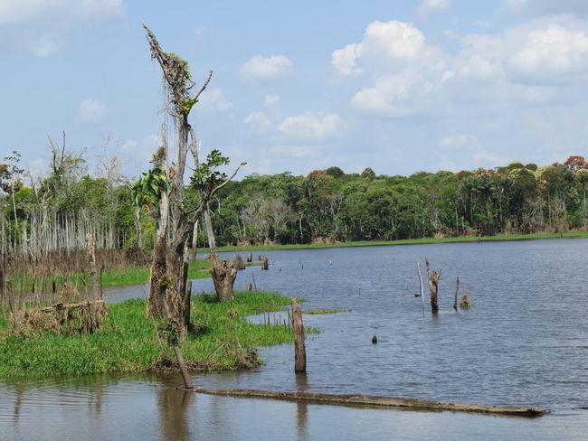 Amazon Amazon River Amazonas Amazonas-Brasil Brazil Tranquil Scene Tranquility Travel The World Water Waterfront