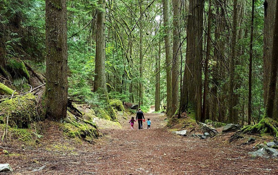 Rich Colors Natural Beauty Nature Among The Trees Among The Giants Perspective Women Who Inspire You