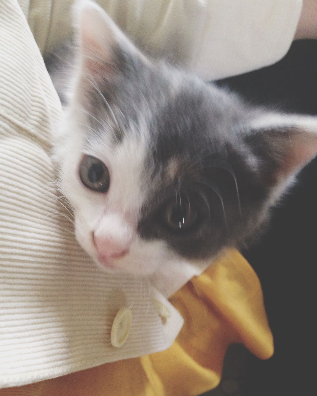 Cat Cat♡ Cat Lovers Babycat Babycat ❤ Cute Pets Cute Cute Cats Taking Photos Catsofinstagram Lovely Adorable Loveit