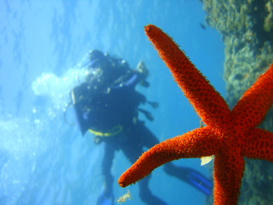Beautiful stock photos of fisch, Adventure, Animal Themes, Animals In The Wild, Aqualung - Diving Equipment